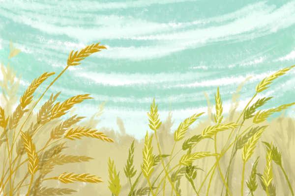 北宋著名文学家铁冠道人苏轼的《水调歌头》如何赏析?