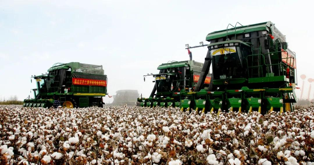新疆棉花彻底火了其中包含很多高考知识点,大家都知道吗?